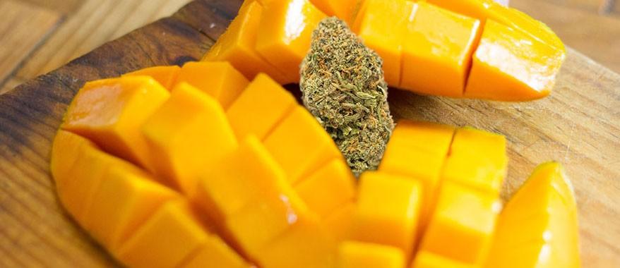 Может ли манго усилить эффект марихуаны