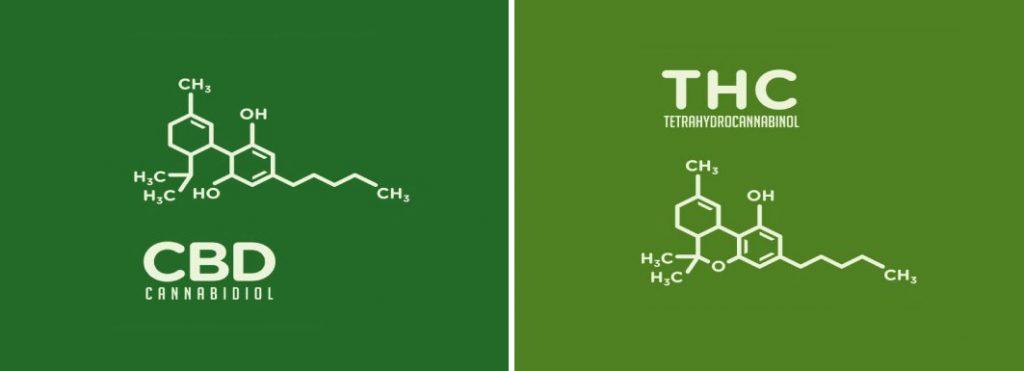 CBD или THC в чем разница